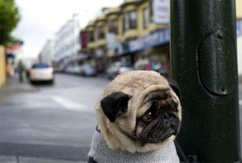 480960 As doen%C3%A7as mais comuns em cachorros 3 As doenças mais comuns em cachorros