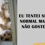 481499 Fotos engraçadas com gato para facebook 02 150x150 Fotos engraçadas com gato para Facebook