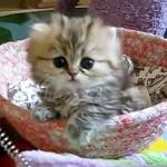 481499 Fotos engraçadas com gato para facebook 05 150x150 Fotos engraçadas com gato para Facebook