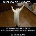 481499 Fotos engraçadas com gato para facebook 09 150x150 Fotos engraçadas com gato para Facebook
