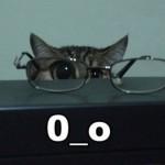 481499 Fotos engraçadas com gato para facebook 12 150x150 Fotos engraçadas com gato para Facebook