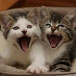 481499 Fotos engraçadas com gato para facebook 13 150x150 Fotos engraçadas com gato para Facebook