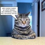 481499 Fotos engraçadas com gato para facebook 14 150x150 Fotos engraçadas com gato para Facebook