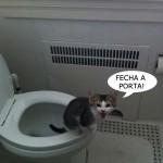 481499 Fotos engraçadas com gato para facebook 16 150x150 Fotos engraçadas com gato para Facebook