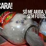 481499 Fotos engraçadas com gato para facebook 18 150x150 Fotos engraçadas com gato para Facebook