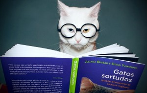 Fotos engraçadas com gato para Facebook