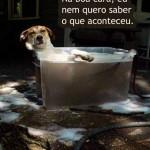 481502 Fotos engraçadas com cachorro para facebook 10 150x150 Fotos engraçadas com cachorros para Facebook