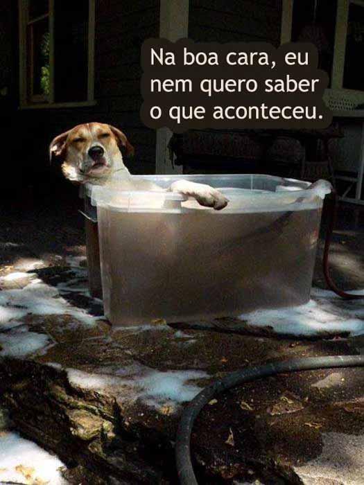 481502 Fotos engra%C3%A7adas com cachorro para facebook 10 Fotos engraçadas com cachorros para Facebook