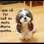 481502 Fotos engraçadas com cachorro para facebook 12 150x150 Fotos engraçadas com cachorros para Facebook