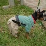 481502 Fotos engraçadas com cachorro para facebook 16 150x150 Fotos engraçadas com cachorros para Facebook