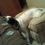 481502 Fotos engraçadas com cachorro para facebook 19 150x150 Fotos engraçadas com cachorros para Facebook