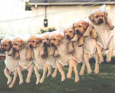 481724 Dicas para tirar fotos de cachorros.5 Dicas para tirar fotos de cachorros