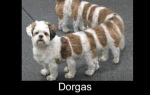 Melhores montagens Dorgas Larguei para facebook