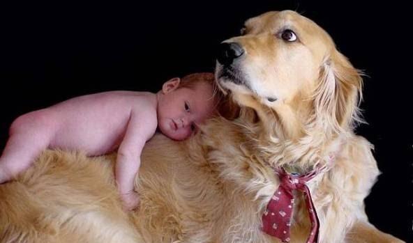 485420 Raças de cachorros que gostam de criança.3 Raças de cachorros que gostam de criança