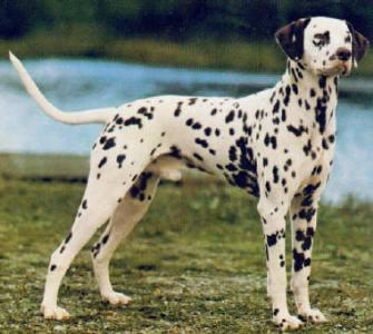 485420 Raças de cachorros que gostam de crianças.5 Raças de cachorros que gostam de criança