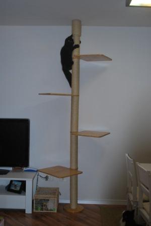 485739 Arranhador para gatos como escolher dicas.5 Arranhador para gatos: como escolher, dicas