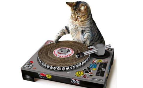 485739 Arranhador para gatos como escolher dicas.6 Arranhador para gatos: como escolher, dicas