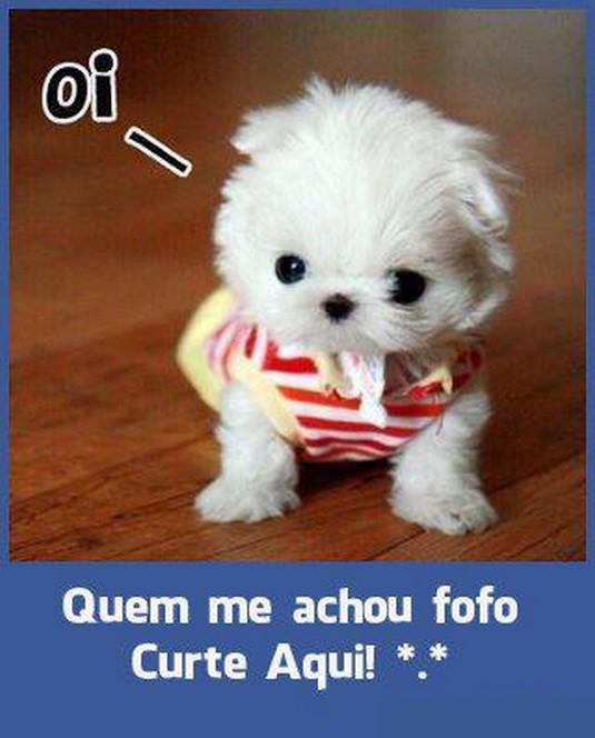 487121 Imagens fofas para facebook 16 Imagens fofas para Facebook