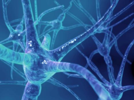 487483 Controle de estresse pode ajudar no tratamento contra esclerose múltipla Controle de estresse pode ajudar no tratamento contra esclerose múltipla
