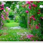 487628 Jardins floridos e bonitos 01 150x150 Jardins floridos e bonitos: fotos
