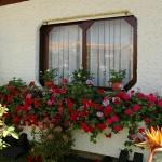 487628 Jardins floridos e bonitos 03 150x150 Jardins floridos e bonitos: fotos
