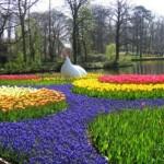 487628 Jardins floridos e bonitos 09 150x150 Jardins floridos e bonitos: fotos