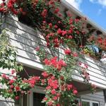 487628 Jardins floridos e bonitos 11 150x150 Jardins floridos e bonitos: fotos