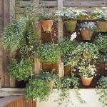 487628 Jardins floridos e bonitos 12 150x150 Jardins floridos e bonitos: fotos