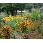 487628 Jardins floridos e bonitos 18 150x150 Jardins floridos e bonitos: fotos