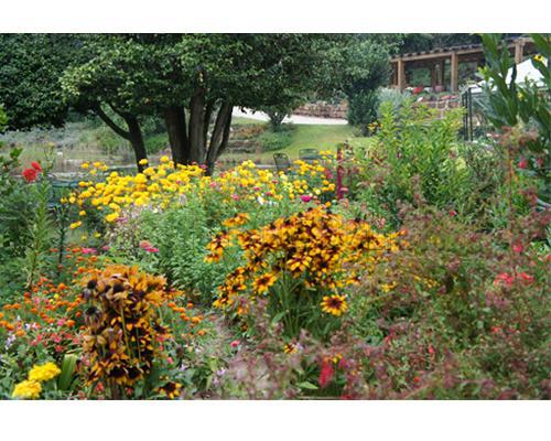 fotos de um jardim florido floridos e bonitos 18 150×150 Jardins