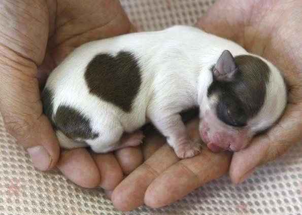 488035 021656883 FMM00 Filhote de cachorro: como amamentar
