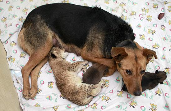 Filhote de cachorro: como amamentar