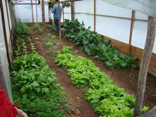 489282 O curso de Horticultura qualifica os profissionais para trabalhar no cultivo de hortas Curso gratuito de Horticultura 2012 – Via rápida