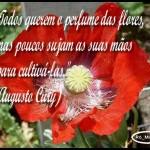 490427 Mensagens de Augusto Cury para Facebook 09 150x150 Mensagens de Augusto Cury para Facebook