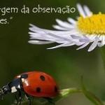 490427 Mensagens de Augusto Cury para Facebook 15 150x150 Mensagens de Augusto Cury para Facebook