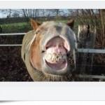 490488 Fotos engraçadas de animais para Facebook 03 150x150 Fotos engraçadas de animais para Facebook