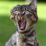 490488 Fotos engraçadas de animais para Facebook 04 150x150 Fotos engraçadas de animais para Facebook