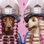 490488 Fotos engraçadas de animais para Facebook 06 150x150 Fotos engraçadas de animais para Facebook