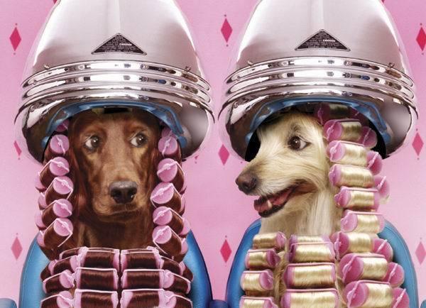 490488 Fotos engra%C3%A7adas de animais para Facebook 06 Fotos engraçadas de animais para Facebook