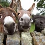 490488 Fotos engraçadas de animais para Facebook 10 150x150 Fotos engraçadas de animais para Facebook
