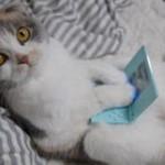 490488 Fotos engraçadas de animais para Facebook 11 150x150 Fotos engraçadas de animais para Facebook