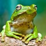 490488 Fotos engraçadas de animais para Facebook 20 150x150 Fotos engraçadas de animais para Facebook