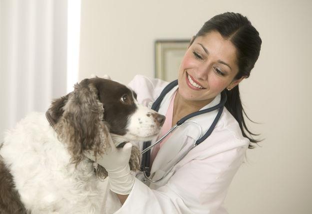 492187 alergias cães1 Alergias em cães: sintomas, tratamento