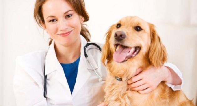 492313 medicina veterinaria cachorro medico 539x300 Dermatite em cães: sintomas, como tratar