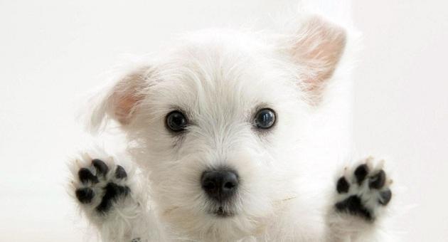 492313 veterinario 102421 Dermatite em cães: sintomas, como tratar