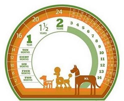 493964 Idade do cachorro em anos humanos como calcular2 Idade do cachorro em anos humanos, como calcular