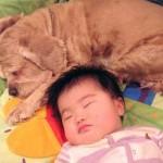 494417 Bebês dormindo fotos 18 150x150 Bebês dormindo: fotos