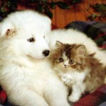 495243 Fotos de cachorros e gatos fofos 01 150x150 Fotos de cachorros e gatos fofos