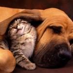 495243 Fotos de cachorros e gatos fofos 04 150x150 Fotos de cachorros e gatos fofos