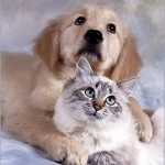 495243 Fotos de cachorros e gatos fofos 06 150x150 Fotos de cachorros e gatos fofos